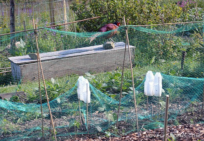 Bon Natural Ways To Keep Birds Out Of The Garden Without Hurting Them. Includes  Various Netting