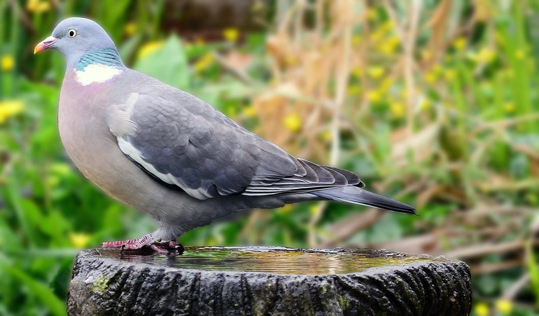 12 Effective ways to keep birds out of the vegetable garden