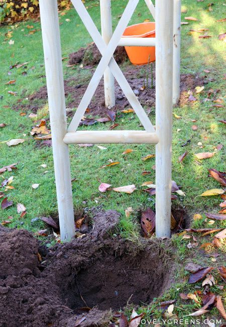 A hole ready to be planted with a rose bush next to a garden arch