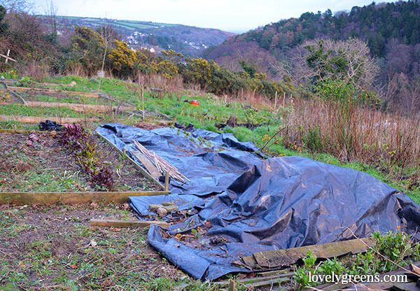 Landscaping Black Plastic Sheeting : Organic gardening how to use black plastic weeds