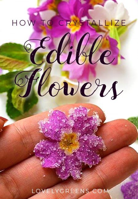Paint primroses and other edible flowers with sugar to transform them into beautifully sweet decorations for desserts and cakes #lovelygreens #edibleflowers