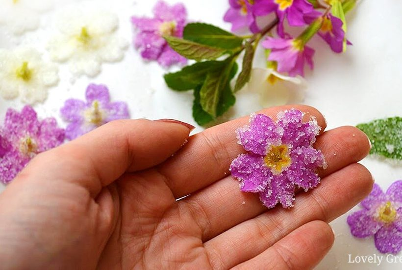 Crystallize primroses to preserve their pretty blossoms long into summer. This simple recipe also works for other edible flowers and requires just a few common ingredients #edibleflowers #naturecraft #floweridea
