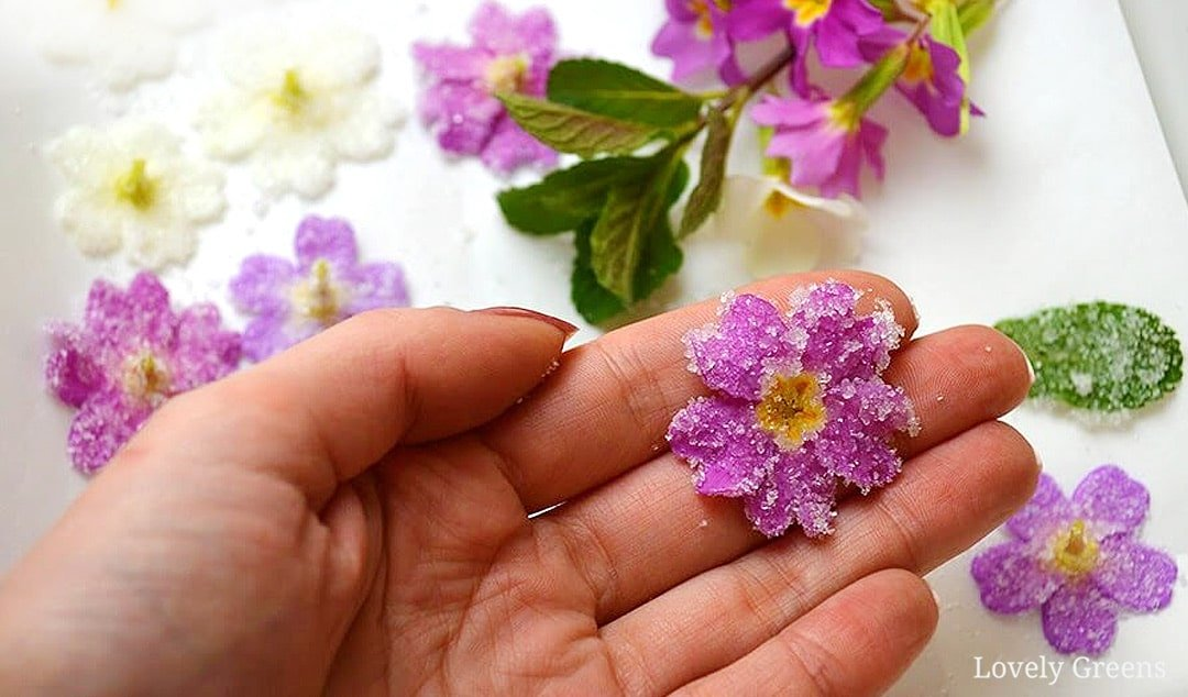 How to Crystallize Primroses and other Edible Flowers