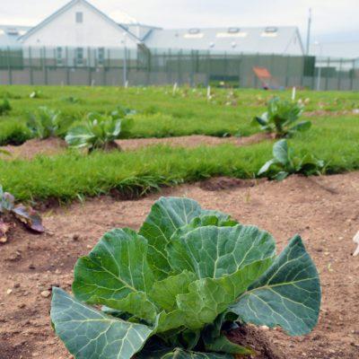 The Isle of Man Prison Vegetable Garden