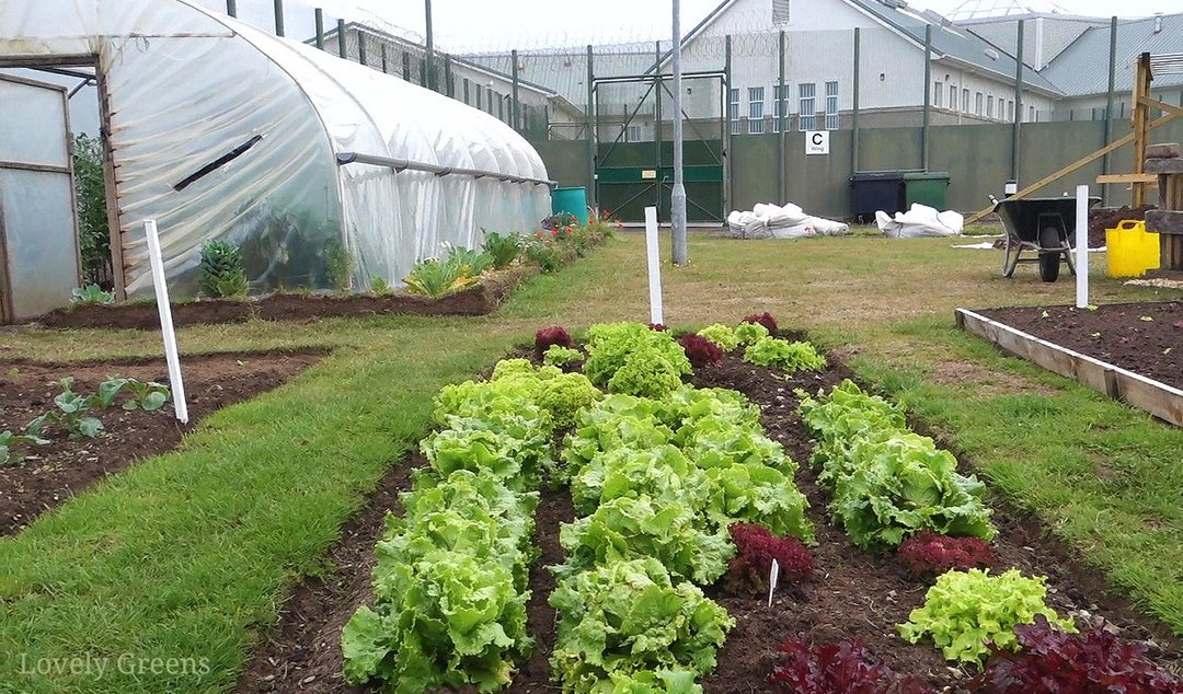 Visiting a Prison Vegetable Garden: how growing vegetables is helping prison inmates find a new path