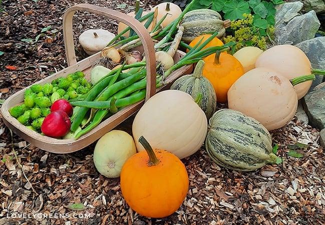 Easy to grow vegetables suitable for a fuss-free garden or the beginner gardener. Includes ten different vegetables, recommended varieties, and basic growing instructions #vegetablegarden #gardeningtips #garden