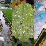 20+ Rainy Garden Ideas & Projects