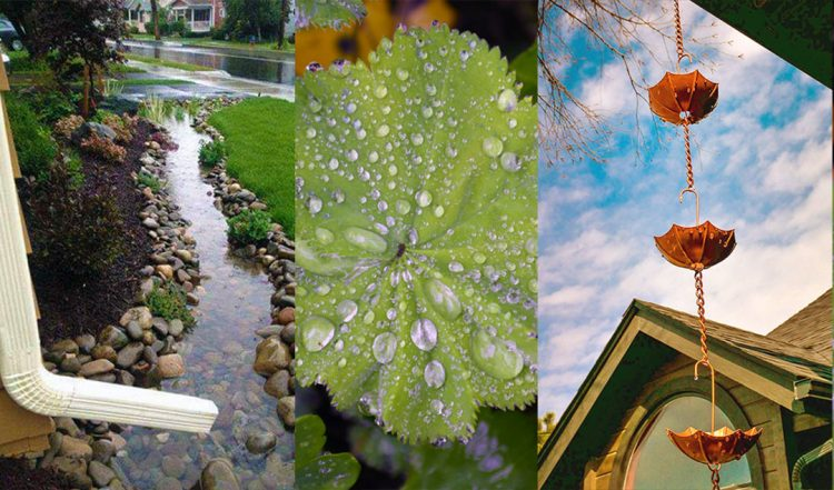 20+ Ideas & Projects to add interest to a Rainy Garden