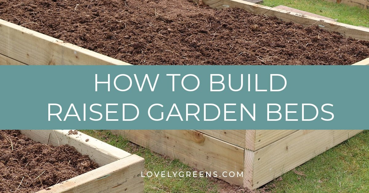 building raised garden beds sizes the best wood tips on filling them