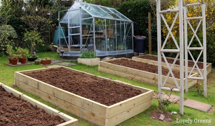 Building Raised Garden Beds: sizes, the best wood, & tips on filling them