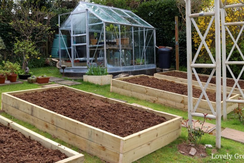 How to build a raised garden bed including guidance on the best sizes, types of wood, and what to fill them with to grow vegetables #gardeningtips #diygarden #raisedbeds
