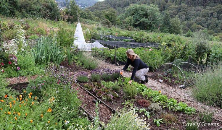 Grow a Rapid Response Victory Garden