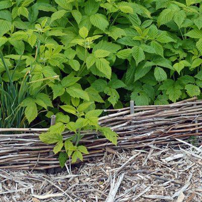 How to weave pruned raspberry canes into attractive garden edging #gardenedging #raspberrycanes #diygarden #gardendiy #gardenproject #recycledgarden