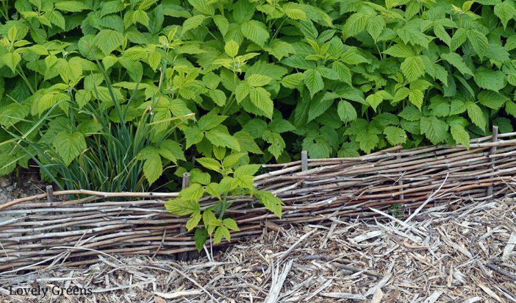 DIY Raspberry Cane Woven Garden Edging