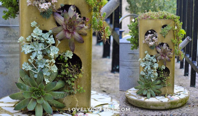 Transform an Old Tin into a Recycled Succulent Planter
