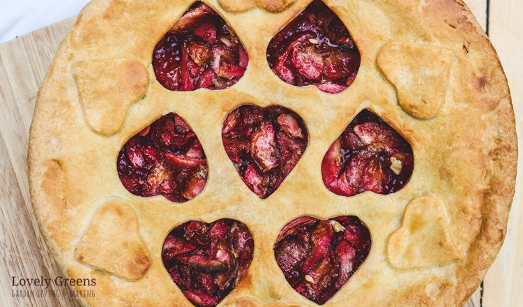 RED Apple Pie Recipe made with Red Fleshed Apples