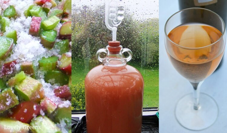 Rhubarb Wine Recipe and full Winemaking Instructions