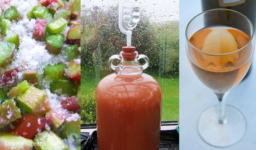 Rhubarb Wine Recipe and full Winemaking Instructions