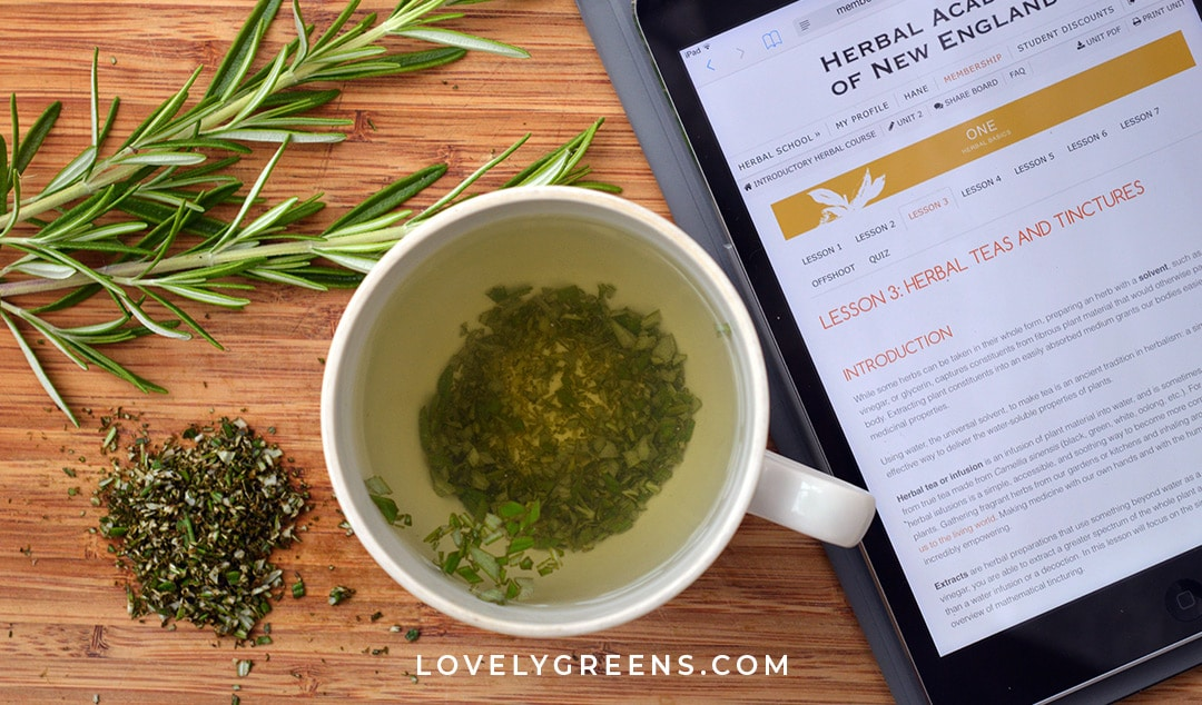 Rosemary Herbal Infusion: a natural tea that helps improve memory and energy levels. This safe herbal medicine is made with directions from the Introductory course of the Herbal Academy #herbs #herbalism