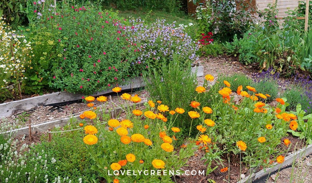 Healing Plants to Grow in a Salve Garden
