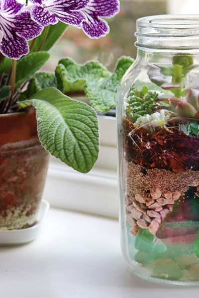 How to make a Sea Glass Succulent Terrarium. Layer sea glass, drainage materials, and compost in a jar to create a pretty succulent planter. You can see all the layers through the glass with the succulents as the crowning glory. Fun idea for a little home garden therapy or make a few at a time to give as gifts #lovelygreens #succulents #succulentterrarium #succulentplanter #seaglass
