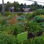 How does an Urban Food Forest work?
