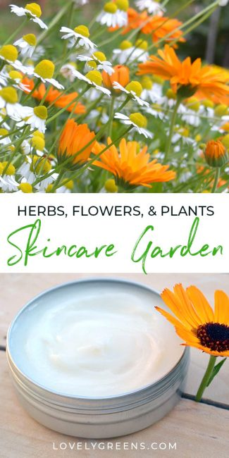 Ideas for growing a skincare garden filled with beauty herbs, flowers, and plants. Includes tips on growing them in the garden, containers, or indoors #lovelygreens #herbalism #herbs