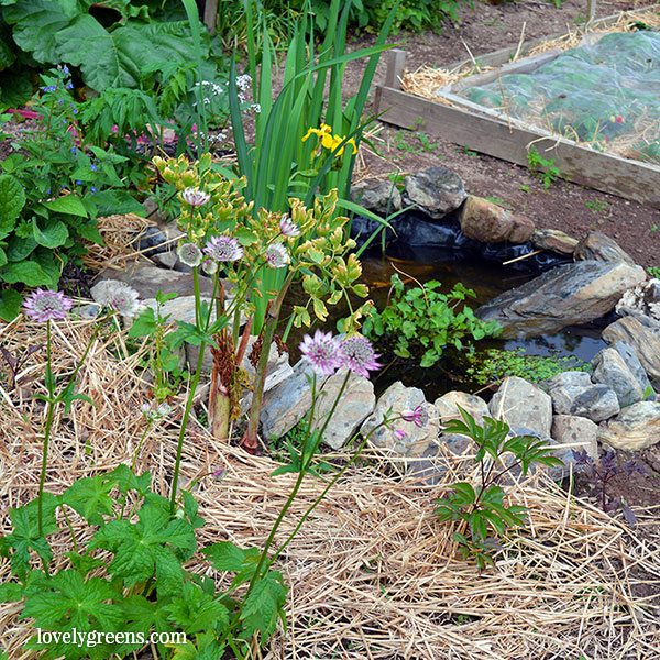Building a small garden pond for wildlife lovely greens for Making a garden pond