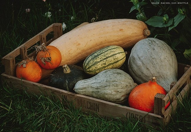 Passionate pumpkin hoarder and self-confessed 'lazy gardener' shares her top tips on how to grow pumpkins and winter squash. Includes ideas for choosing the right varieties, soil preparation, sowing, and why she never saves her own seeds #lovelygreens #growpumpkins #organicgardening