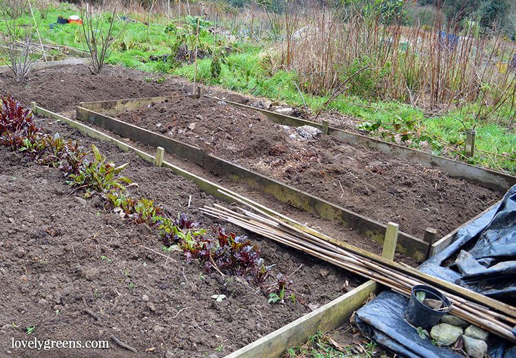 Organic Gardening How To Use Black Plastic To Kill Weeds