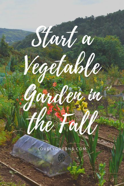The best time to start a vegetable garden is in the Fall