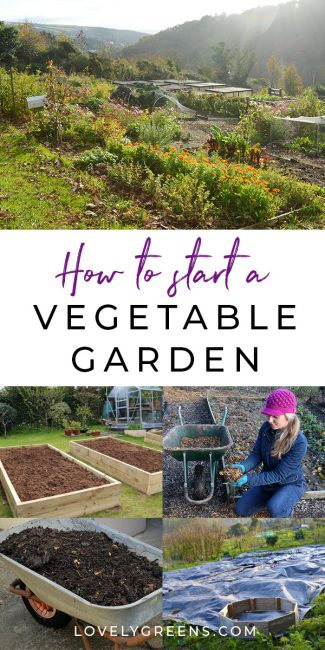 Tips on starting a new vegetable garden including ideas for clearing land, mulching, compost, and amending soil. Tips are geared for autumn but can be used at any time in the year #gardeningtips #vegetablegarden