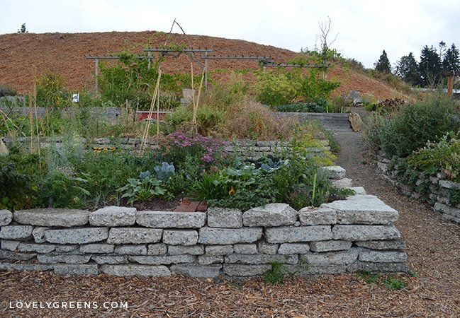 A visit to a permaculture food forest and p-patch, how it works, and realistic tips for starting your own urban food forest #permaculture #urbangardening