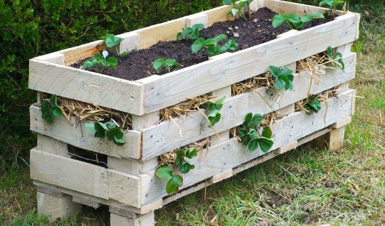 Video Tutorial: How to Make a Strawberry Pallet Planter