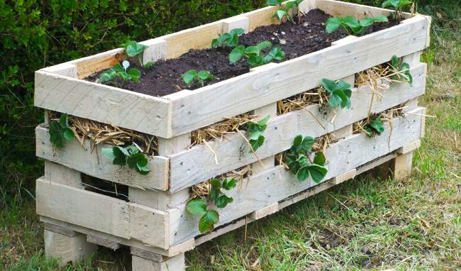How to Make a Better Strawberry Pallet Planter • Lovely Greens