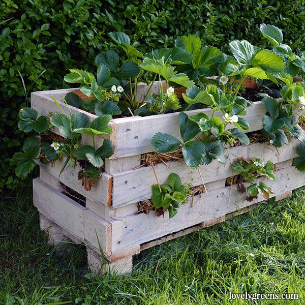 Strawberry Pallet Planter by Lovely Greens