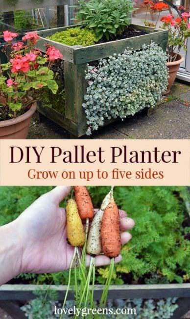 DIY Succulent Faced Planter