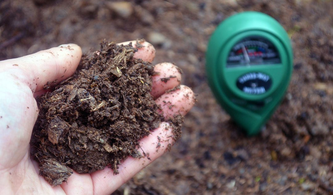 Testing Soil pH: why testing and amending is important in your vegetable garden