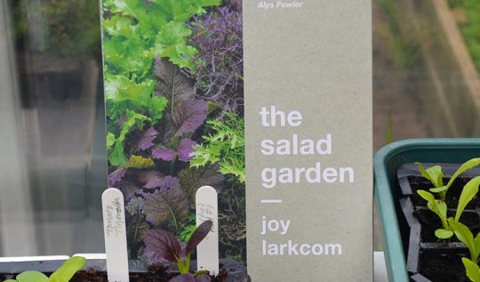The Salad Garden + Giveaway