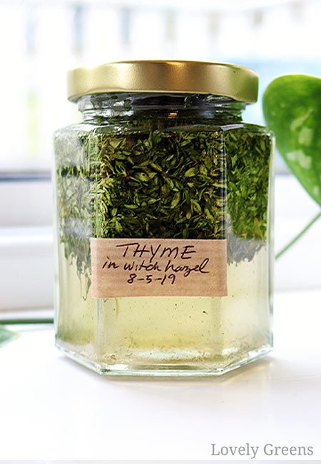 Thyme tincture for combating acne and break-outs. Part of an introduction to how to use herbs and flowers to make natural herbal skin care. Covers herbal extracts recipes using them to make lotions, creams, and other beauty items. Part of the DIY Herbal Skin Care series #lovelygreens #herbalskincare #diybeauty