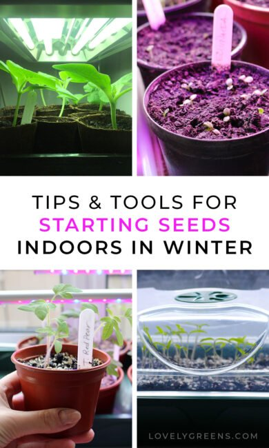 Tips for starting seeds indoors for a head-start on spring. Includes information on when to sow seeds, growing conditions, grow lights, propagators, and creating the right conditions for healthy seedlings and plants #gardeningtips #vegetablegarden #growlights