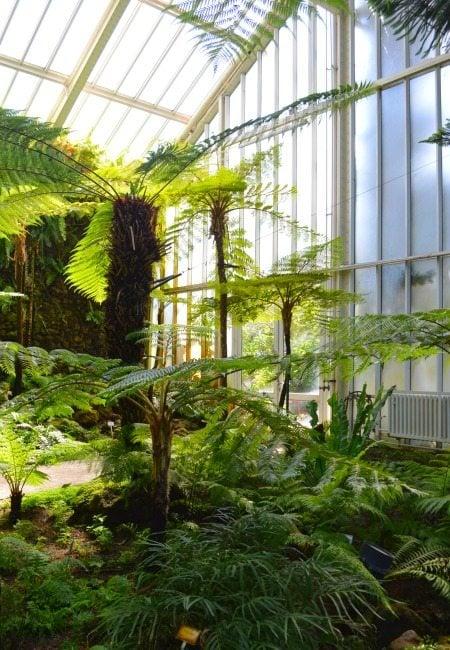 The Botanical Garden in Berlin