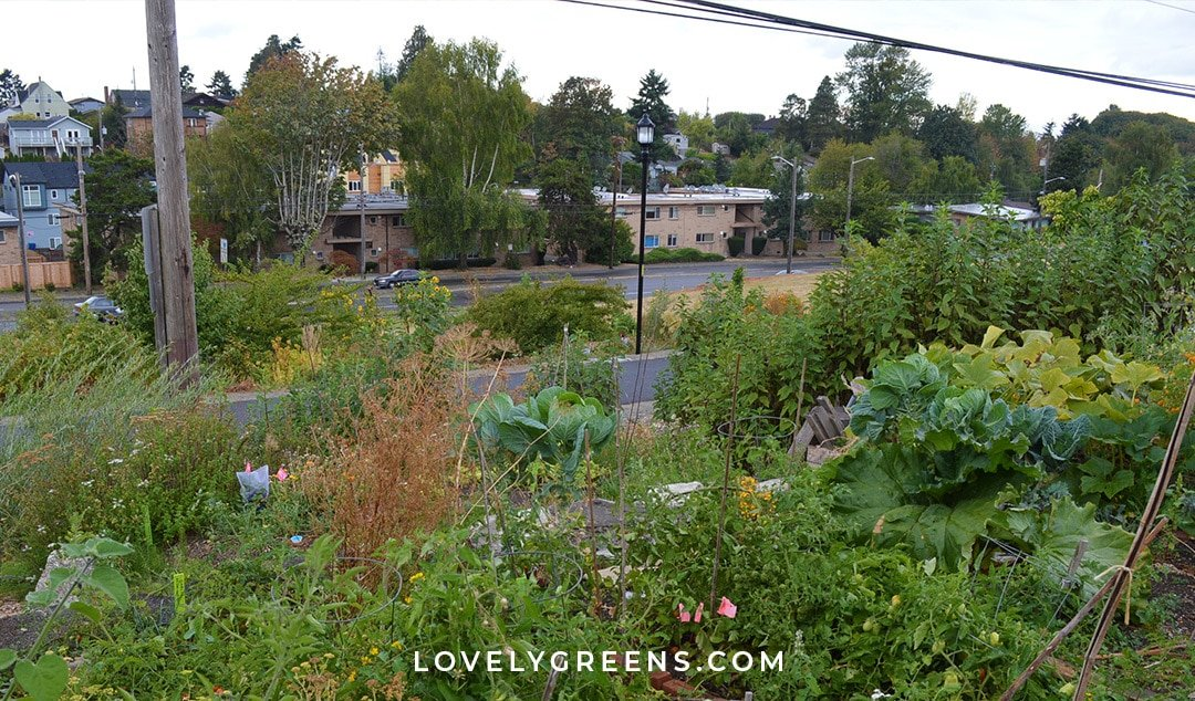 Tips on Starting an Urban Permaculture Food Forest