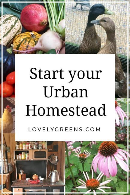 5 Tips to Start your Urban Homestead. Lack of land does not have to stop you from living your dream right now, whether you have a balcony or 100 acres, you can be a homesteader #homestead #homesteading #greenliving