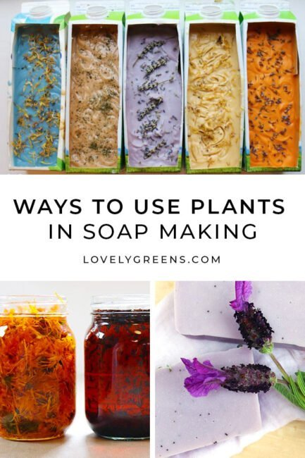 Creative ways to use plants in soap making, including those for scent, exfoliation, decoration, and natural color #soapmaking #soaprecipe #coldprocess