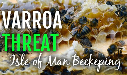 Varroa Threat on the Isle of Man