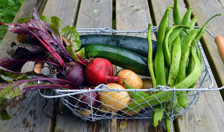 Tips for Starting a Vegetable Garden in the Fall