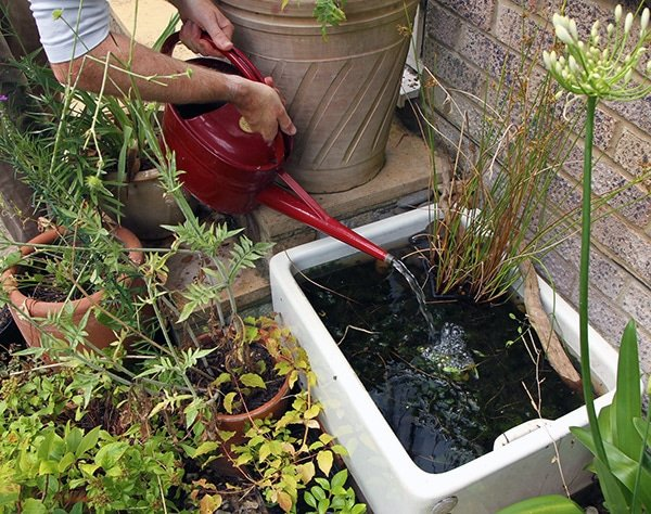 pouring water into a vintage sink converted into a mini pond