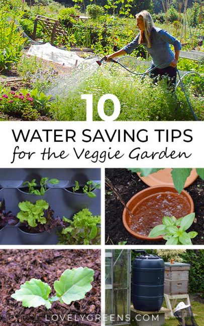 10 Water Saving Tips for the Vegetable Garden including times to water, using seep hoses, ollas, mulch, and recycling water #organicgardening #wateringplants #savewater #wateringtips #veggiegarden #vegetablegardening #lovelygreens