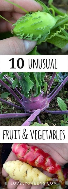 Top 10 Unusual Edibles to Grow in your Garden #lovelygreens #vegetablegarden